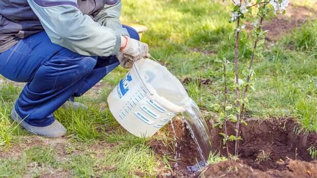 Дачные хлопоты: 6 способов облегчить жизнь огородников