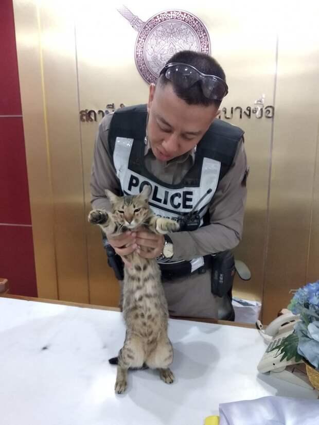 В Тайланде в полицейском участке служит кот