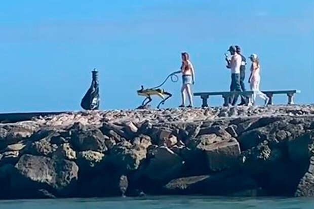 «Собаки в2080 году»: прогулка девушки сробопсом по пирсу шокировала Сеть