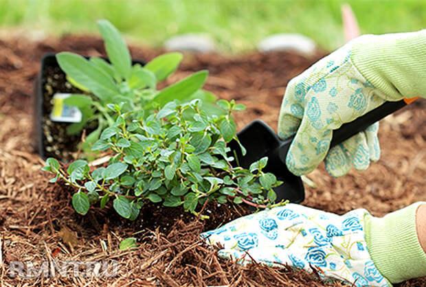 Пять мифов об органическом земледелии