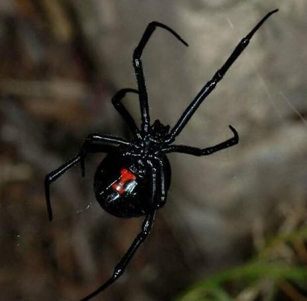 Американец пообедал пауками (ВИДЕО)