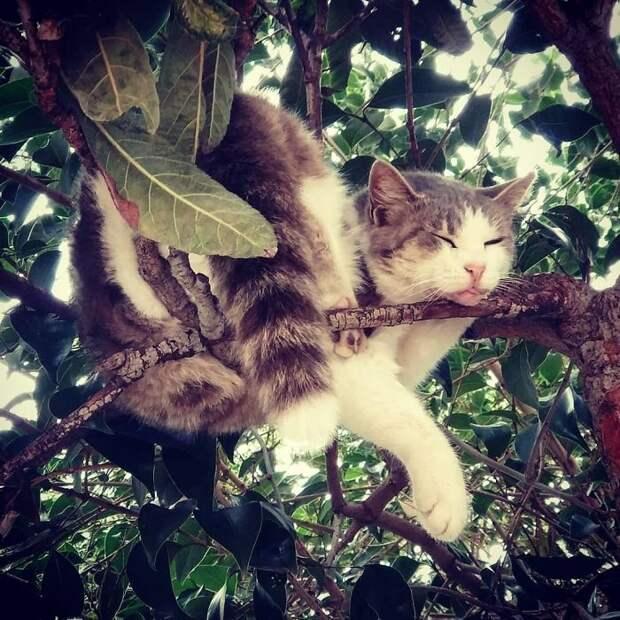 Ученые спорят, действительно ли кошки изначально росли на деревьях?