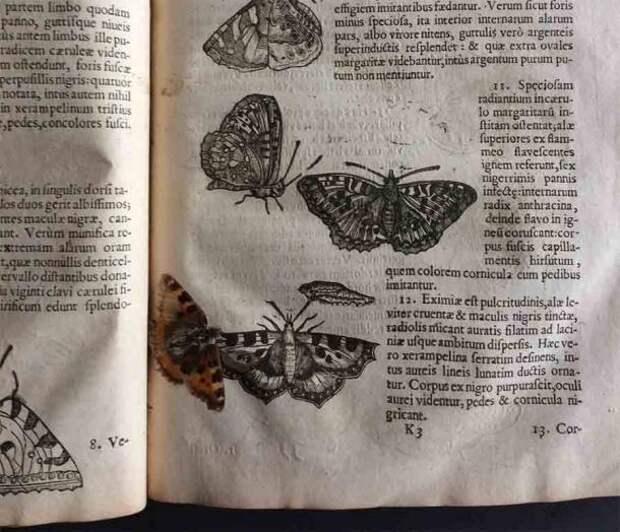 В книге 17 века о насекомых сохранилась бабочка. Она лежала рядом со своим изображением