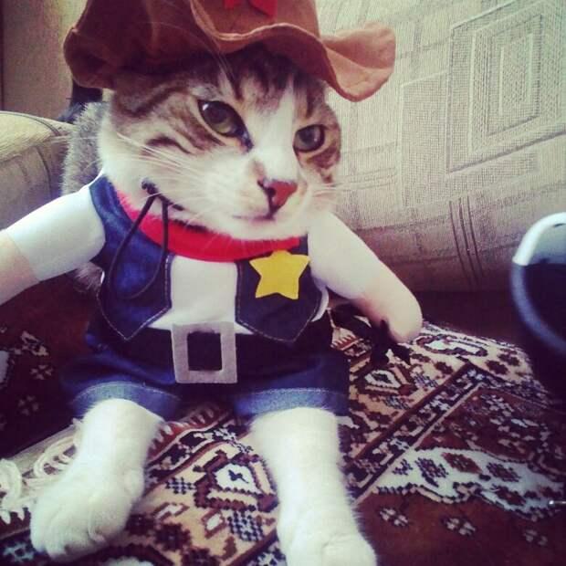 Неужели это – для живых котов?! Обзор весёлых, но бесполезных костюмов для вашего питомца