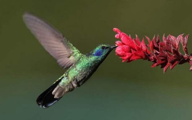 Физика в мире животных: колибри и ее полет…