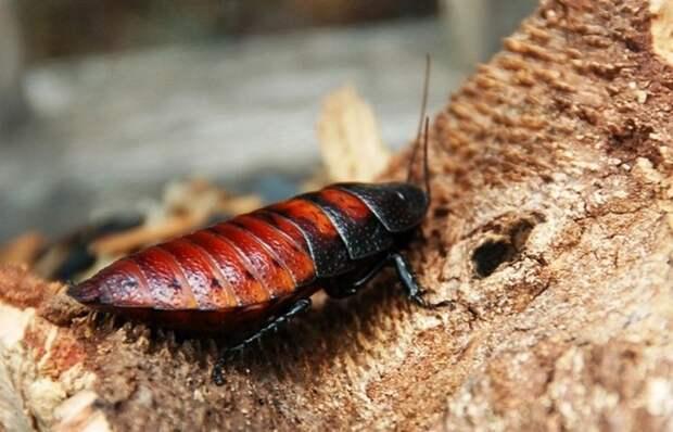 Безумное соревнование: конкурс по поеданию живых тараканов.