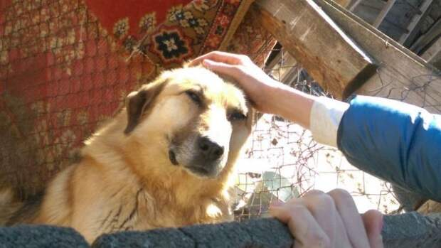 Парень из Баку спас уже 350 искалеченных собак!