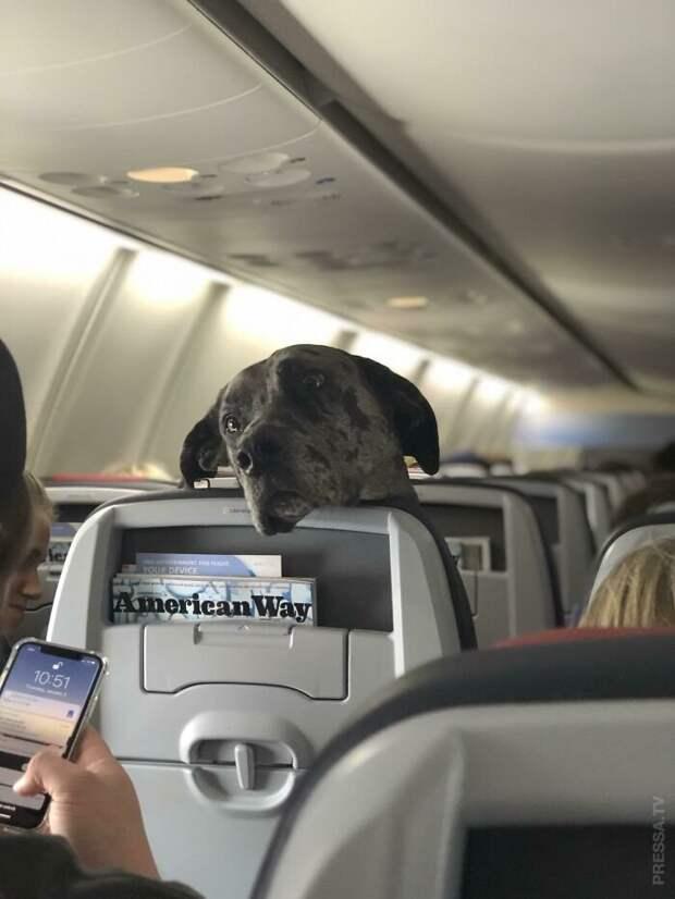 Животные-путешественники