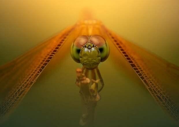 Чумовые фотографии дикой природы (52 фото)