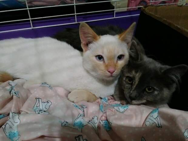 Два котенка с кривыми лапами жались друг к другу, ожидая помощи история, история спасения, коты, котята, кошки, мило, спасение животных, трогательно