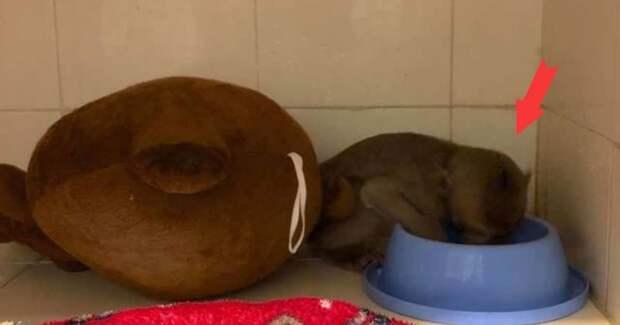 «Мамочка, прости меня!» Детеныша макаки нашли в плачевном состоянии, но оказалось, что он просто был пьян…