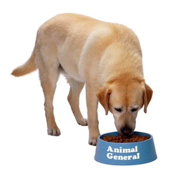 Собаки - Растровые клипарты @ EX.UA