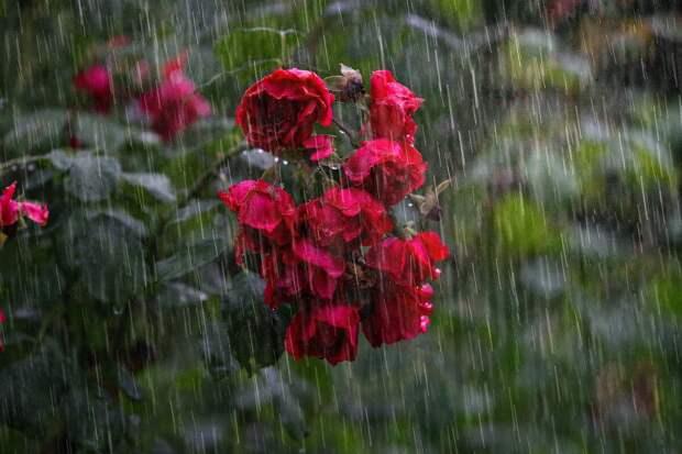 Любовный приворот на дождь