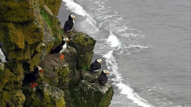 Ученые объяснили, как морские птицы путешествуют по воздуху и воде