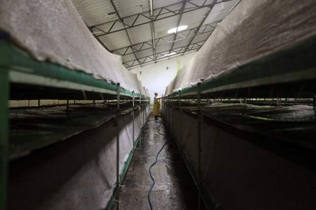 Сотрудник обмывает панели, где держат садовых улиток.