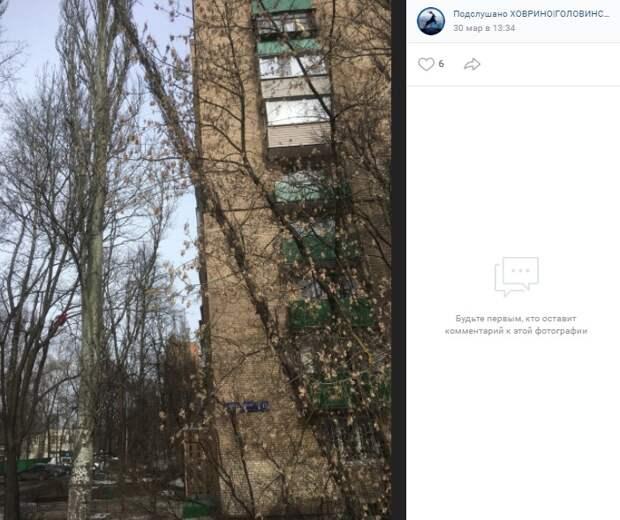 В Конаковском сгнившее дерево повисло над дорогой