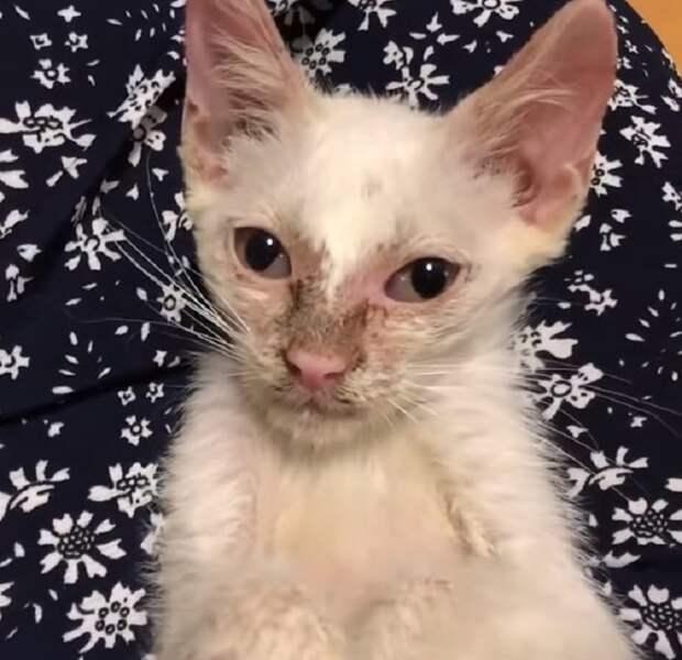 Из-под машины выскочил грязный худой котёнок. Он был больным и ждал помощи