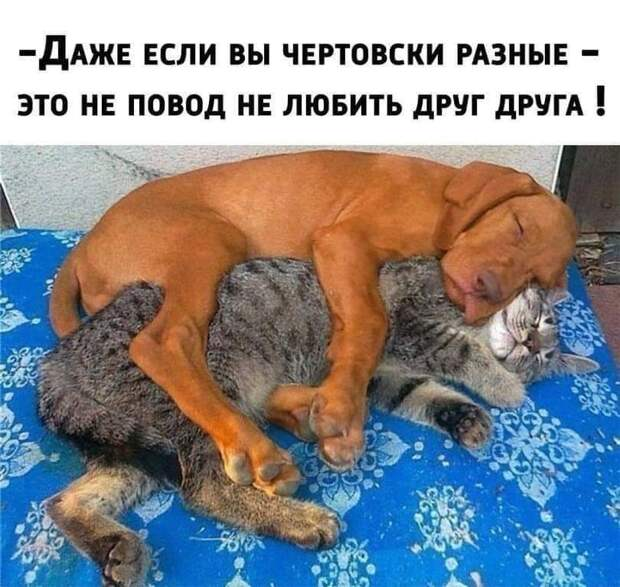 Жена жалуется мужу: - Сёма, ну что это мы с тобой сидим дома, никуда не ходим...