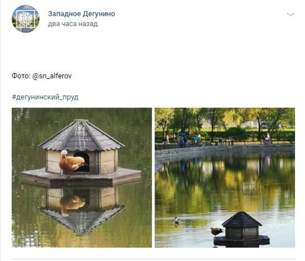 Фото дня: утиные домики на Дегунинском пруду