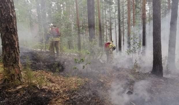 Тотальный запрет на выход влес будет введен вСвердловской области
