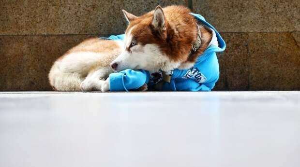 Каждый день пёс в синем свитере сидел по 8 часов у торгового центра. Напрасно люди беспокоились, у него всё чудесно!