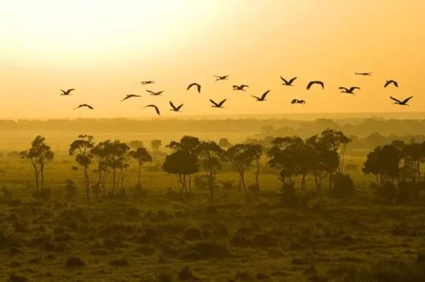 Птицы над саванной